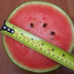 thai_watermelon_measurement[1]
